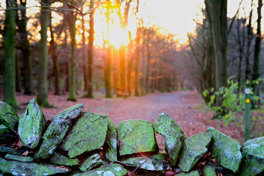Beacon Hill Professional Landscape Photography Leicestershire impactvisuALS